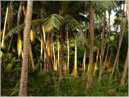 Siquijor - Philippines
