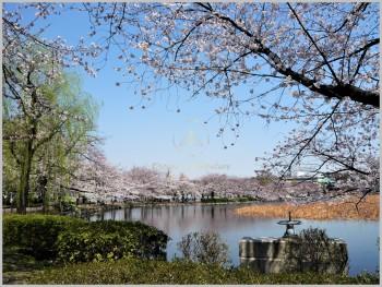 Shinobazu Pond - Japan