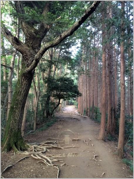 Mount Takao - Japan