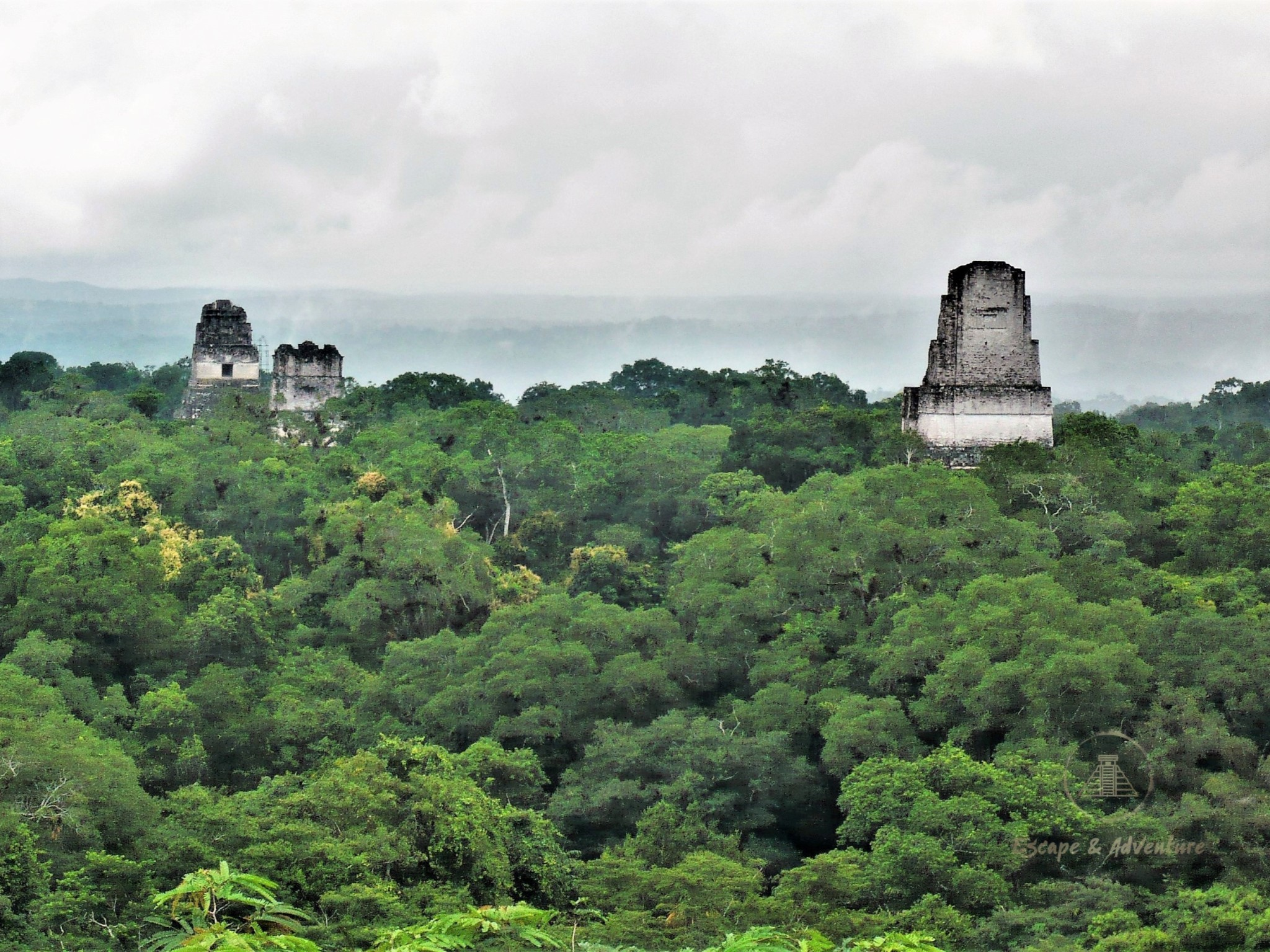 The tops of three Mayan pyramids rising out of the green jungle canopy in Tikal, Guatemala.