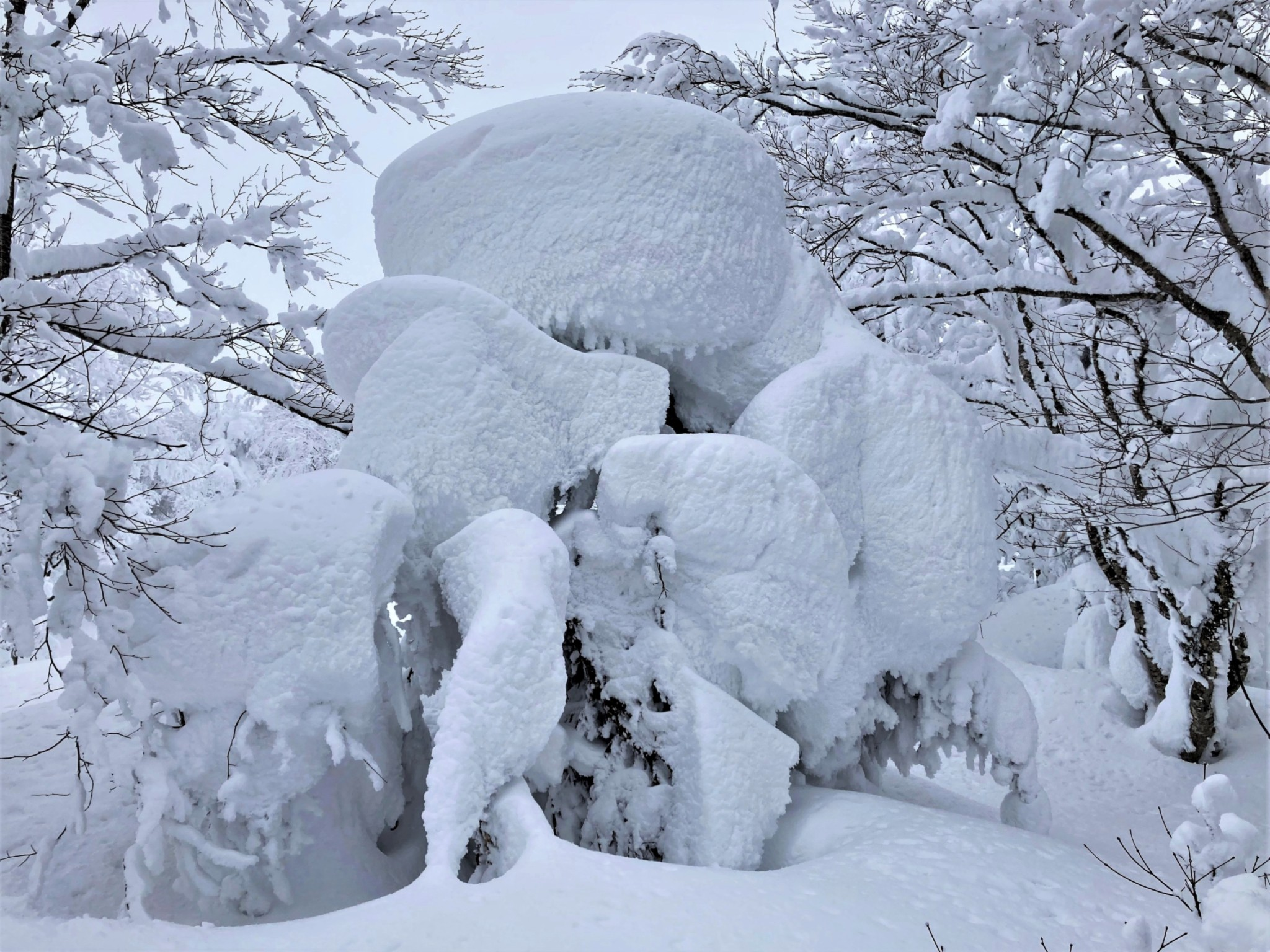 A crab-shaped snow monster standing between icy trees on Mount Zao in Yamagata, Japan.
