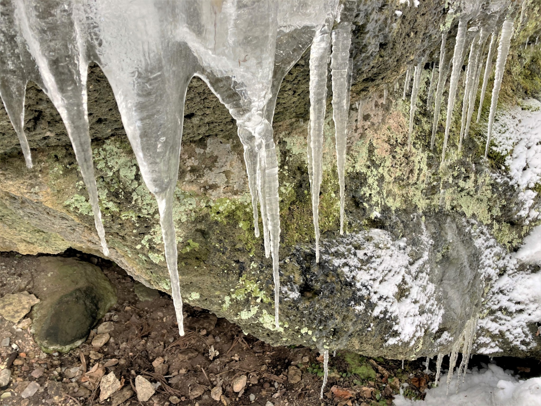 Several large semi-transparent icicles overhanging a moss-covered rock in winter.