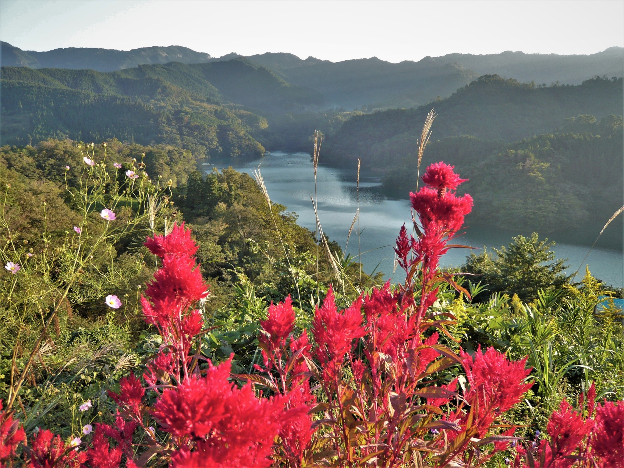 A scenic view of a tranquil lake and forested hills with bright red flowers in the foreground.