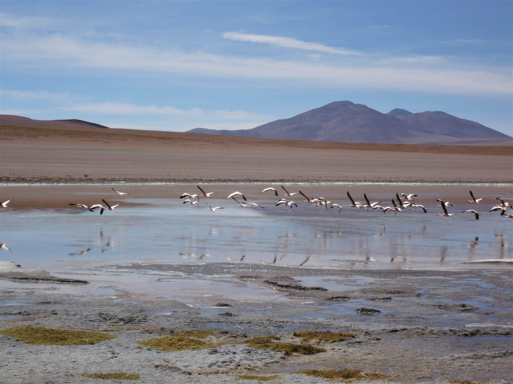 A scenic view of a flock of flamingos flying low over a lake in the Bolivian highlands.