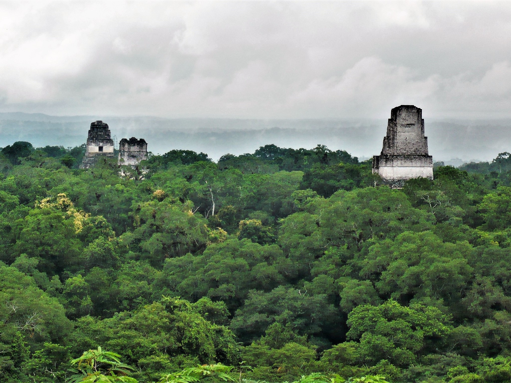 A scenic view of the peaks of three Mayan temples piercing the green jungle canopy.